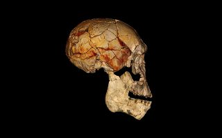homo-erectus-o-protos-anthropos-poy-milise-itan-naytikos-kai-efthase-os-tin-kriti-symfona-me-epimachi-theoria
