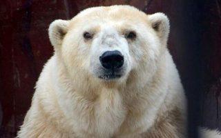(Πηγή φωτό: zoo.perm.ru)