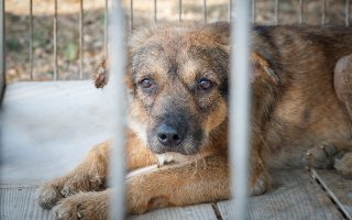 «Eχει αποδειχθεί πως όσοι κακοποιούν ζώα είναι εν δυνάμει επικίνδυνοι και για βία κατά ανθρώπων», τονίζει η πρόεδρος της Πανελλήνιας Φιλοζωικής Ομοσπονδίας.