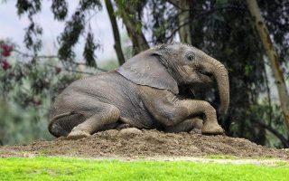 mia-ellinida-richnei-fos-sto-dna-ton-elefanton0