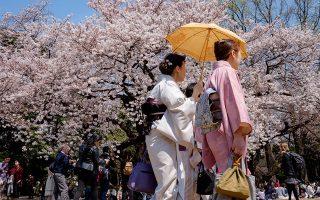 Το πάρκο Shinjukugyoen είναι το πιο δημοφιλές σημείο hanami για όσους προτιμούν κάτι ήρεμο και χαλαρό. (Φωτογραφίες: Ανδρονίκη Χριστοδούλου)
