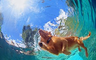 © Shutterstock