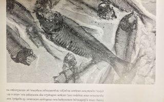 Aπολιθωμένα ψάρια έχουν διατηρηθεί σε εξαιρετική κατάσταση για εκατομμύρια χρόνια. Η Παλαιολιθική Εποχή δίνει διατροφικές συμβουλές.