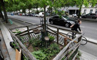 Αστικοί κήποι 1. Ενα διευρημένο κομμάτι που φιλοξενεί δένδρο σε πεζοδρόμιο του Παρισιού, έγινε λαχανόκηπος. Οι κάτοικοι της γαλλικής πρωτεύουσας με την άδεια του δήμου (!) έχουν αρχίσει να φυτεύουν λαχανικά, αρωματικά φυτά αλλά και καλλωπιστικά.  REUTERS/Charles Platiau