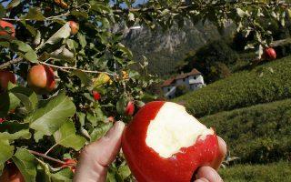 Κανείς δεν προειδοποίησε την επιβάτιδα ότι έπρεπε να δηλώσει στο τελωνείο των ΗΠΑ το μήλο που της προσέφεραν κατά τη διάρκεια της πτήσης.