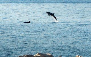 ta-delfinia-ypodechtikan-toys-istioplooys-stin-patra0