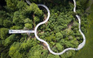 Σαν πουλί. Πως είναι να βλέπεις πάνω στα κλαδιά και τις κορφές των δένδρων; Σε αυτή την ανάγκη θέλησαν να απαντήσουν οι δημιουργοί του ξύλινου περιπάτου στο Mogelsberg της Ελβετίας  που σε κάποια σημεία φτάνει τα 50 μέτρα ύψος και έχει 500 μέτρα μήκος. EPA/GIAN EHRENZELLER