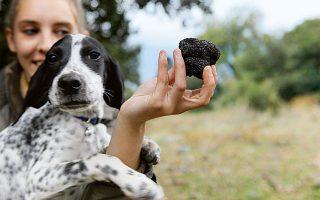 Εμπιστευτείτε την αλάνθαστη... μύτη ενός τρουφόσκυλου και βγείτε για κυνήγι τρούφας στα Μετέωρα. (Φωτογραφία: © ΚΑΤΕΡΙΝΑ ΚΑΜΠΙΤΗ)