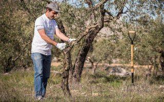 Η πρωτοβουλία δίνει τη δυνατότητα σε όποιον το επιθυμεί να υιοθετήσει ένα δένδρο για 50 ευρώ τον χρόνο.