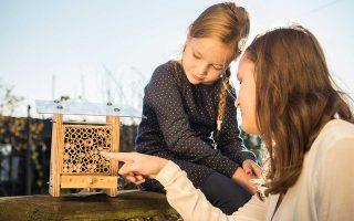 Kάθε κυψέλη μπορεί να συνεισφέρει στη γέννηση πάνω από 100 μελισσών κάθε χρόνο.
