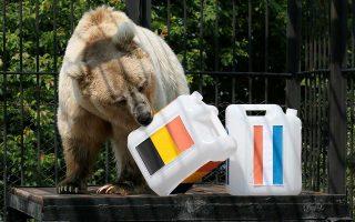Mπορεί οι περισσότεροι να χρίζουν ως φαβορί τη Γαλλία, αλλά ο Παμίρ, η 11χρονη αρκούδα του ζωολογικού κήπου του Κρασνογιάρσκ, επέλεξε Βέλγιο. Μένει να δούμε αν έχει δίκιο...