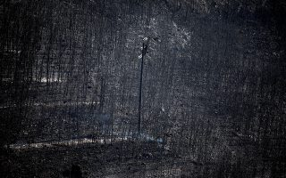 An electricity pole stands among burnt trees following a wildfire in Neos Voutzas, near Athens, Greece, July 25, 2018. REUTERS/Alkis Konstantinidis      TPX IMAGES OF THE DAY