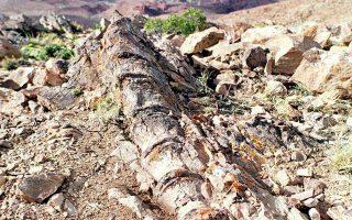argentini-anakalyfthike-gigantiaios-deinosayros-ilikias-megalyteris-ton-200-ek-eton0