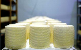 Τα λαδοτύρια του Μυστακέλλη μετά από 3 μήνες ωρίμασης. Χρειάζονται άλλους 3, ώστε να αποκτήσουν πολύπλοκη, ξηροκαρπάτη γεύση. (Φωτογραφία: Νίκος Κόκκας)