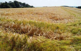 Σύμφωνα με το Συμβούλιο Γεωργίας και Τροφίμων της Δανίας, η μειωμένη απόδοση των καλλιεργειών θα προκαλέσει ζημίες 855 εκατ. ευρώ.