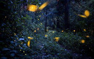 Εικόνα από παραμύθι. Πυγολαμπίδες στο δάσος της Santa Clara, στην επαρχία Tlaxcala του Μεξικού  την περίοδο του ζευγαρώματος. EPA/Hilda Rios