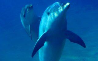 Ενα δελφίνι έχει τρομοκρατήσει τους επισκέπτες της Βρετάνης.