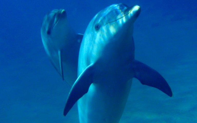 Περιπτύξεις δελφινιού διώχνουν τουρίστες