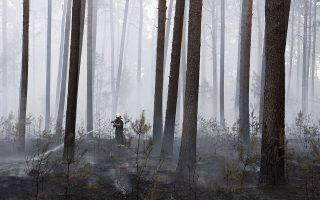 A firefighter battles a fire burning in a forest near the village Beelitz, south of Berlin, Germany, Saturday, Aug. 25, 2018. (Ralf Hirschberger/dpa via AP)