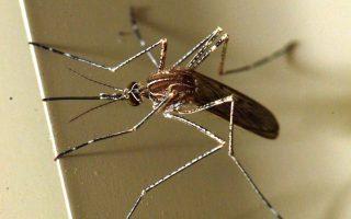 Κουνούπι  στέκεται σε τοίχο κτιρίου, στην ΑΘήνα,  Πέμπτη 11 Απριλίου 2013. ΑΠΕ-ΜΠΕ/ΑΠΕ-ΜΠΕ/Παντελής Σαΐτας