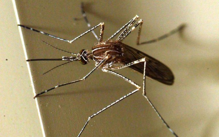 «Καμπανάκι» της ΠΟΕΔΗΝ για τον ιό του Δυτικού Νείλου