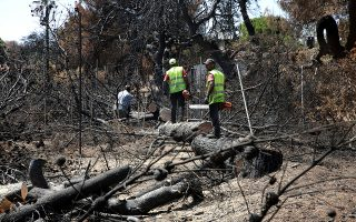 Συνεργεία κόβουν και απομακρύνουν καμένους κορμούς δέντρων από καμένες εκτάσεις στο Μάτι Αττικής, Κυριακή 19 Αυγούστου 2018, μετά την πυρκαγιά που ξέσπασε στην περιοχή στις 23 Ιουλίου αφήνοντας πίσω της 94 νεκρούς και τεράστιες καταστροφές σε οικείες και περιουσίες. ΑΠΕ-ΜΠΕ/ΑΠΕ-ΜΠΕ/ΣΥΜΕΛΑ ΠΑΝΤΖΑΡΤΖΗ