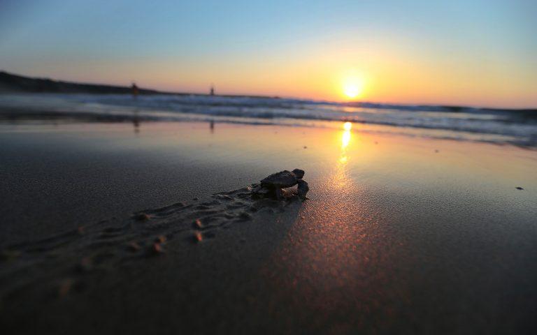 Μεξικό: Νεκρές βρέθηκαν 122 θαλάσσιες χελώνες