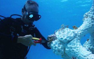 Τα πειραματικά τεχνητά κοράλλια προσελκύουν κάθε είδος θαλάσσιας ζωής.