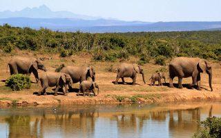 nekroi-87-elefantes-apo-lathrokynigoys-stin-mpotsoyana0