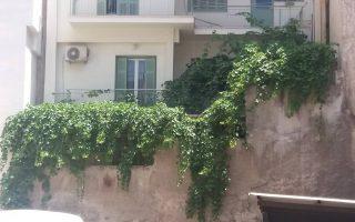 Η κληματαριά στην Κυψέλη, της κυπριακής ποικιλίας «βέρικο», συνεχίζει να βγάζει γλυκά σταφύλια και να κρατάει ζωντανή τη μνήμη.