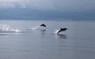 delfinia-ston-thermaiko-vinteo-2279712