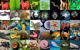 Την αποκωδικοποίηση του γενετικού υλικού όλων των σύνθετων μορφών ζωής θα φέρουν εις πέρας οι επιστήμονες εντός μιας δεκαετίας.