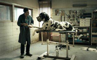 Το «Dogman» του Ματέο Γκαρόνε («Γόμορρα»), παρά το κάπως αμήχανο φινάλε του, ήταν από τις προβολές που συγκίνησαν το «Ολύμπιον».