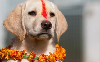 Γιορτάζουν. Με γιρλάντες και πολύχρωμες σκόνες στολίστηκαν οι σκύλοι με αφορμή το ινδουιστικό φεστιβάλ Diwali αφιερωμένο στους τετράποδους φίλους μας. Ανάμεσα στους εορτάζοντες και το εικονιζόμενο κουτάβι, ο «Sindoor» που γιόρτασε μαζί με τους άλλους σκύλους που υπηρετούν στο στρατό. REUTERS/Navesh Chitrakar