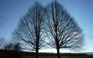 Δίδυμα δένδρα. Το φθινόπωρο είναι υπέροχο όπου υπάρχουν δάση, όπου η φύση έχει πρωταγωνιστικό ρόλο. Οπως στην φωτογραφία που έστειλε ο αναγνώστης της «Κ», Κυριάκος Ξεπαπαδάκος από το Μόναχο, όπου ζει εδώ και μερικές δεκαετίες με την οικογένειά του.