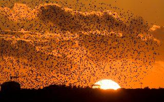 Τα ψαρόνια κατακτούν τον ουρανό πάνω από την Αιώνια Πόλη, βρωμίζοντας τα πάντα με τις κουτσουλιές τους.