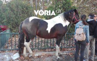 Πηγή φωτογραφίας: voria.gr