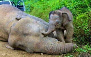 notia-afriki-diadiloseis-gia-tin-apeleytherosi-tis-teleytaias-elefantinas-toy-zoologikoy-kipoy-toy-giochanesmpoyrgk0