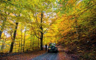 Τζιπάδα στα πολύχρωμα δάση της Βάλια Κάλντα. Η περιοχή είναι από τις πιο παρθένες της Ελλάδας. (ΦΩΤΟΓΡΑΦΙΑ: ΚΛΑΙΡΗ ΜΟΥΣΤΑΦΕΛΛΟΥ)