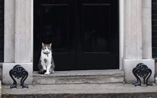 Larry the Downing Street cat sits outside the door of No. 10 Downing Street, in central London, on May 12, 2015, ahead of the first Cabinet meeting after the May 7 general election. British Prime Minister David Cameron unveiled his new cabinet after an unexpected election victory that gave his Conservative party an outright majority in parliament for the first time in nearly 20 years.    AFP PHOTO / LEON NEAL