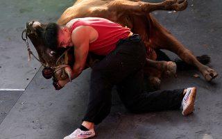 Οι καημένοι οι ταύροι. Με ένα από τα πιο δυνατά ζώα μετρούν την δύναμή τους οι άνθρωποι. Στην Ισπανία τους σκοτώνουν, στην Κίνα παλεύουν μαζί τους. Στην φωτογραφία ο Zhong Xiaojie19 ετών κάνει κεφαλοκλείδωμα σε ένα κακόμοιρο ζώο. REUTERS/Aly Song