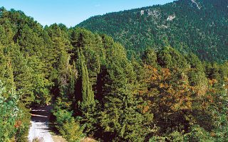 Για το ΤΕΕ η βιώσιμη ανάπτυξη περιλαμβάνει την κατάργηση του τεκμηρίου υπέρ του Δημοσίου στις δασικές εκτάσεις και την επανεξέταση όλου του πλαισίου κατάρτισης των δασικών χαρτών.