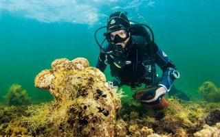 Οι τεράστιες πίννες, τα προστατευόμενα όστρακα, αφανίζονται από τις θάλασσες της Μεσογείου εξαιτίας ενός παρασίτου, του Haplosporidium pinnae, το οποίο μεταδίδεται μάλλον μέσω του φυτοπλαγκτόν και τις προσβάλλει, οδηγώντας τις σε βέβαιο θάνατο.