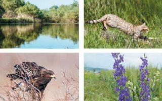 Η περιοχή Δέλτα Εβρου συγκαταλέγεται στους σημαντικότερους βιοτόπους της Ευρώπης και είναι ενταγμένη στον κατάλογο των προστατευόμενων περιοχών λόγω των σημαντικών ειδών που φιλοξενεί.