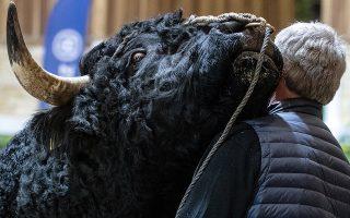 Ο Φερδινάδος. Αν και τεράστιος και απειλητικός δεν παύει να είναι ένα τρυφερό ζώο που ανταποδίδει την αγάπη που εισπράττει. Ο μαλλιαρός, μαύρος ταύρος κάνει αγάπες στο αφεντικό του σαν άλλος Φερδινάδος από το αγαπημένο animation  των παιδιών. Η φωτογραφία  από την ετήσια Πράσινη Εβδομάδα στο Βερολίνο με τιμώμενη χώρα την Φινλανδία. EPA/HAYOUNG JEON