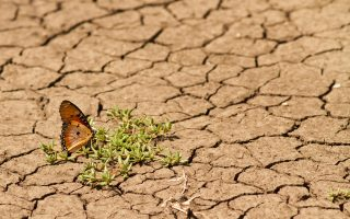 Από τη μία η ερημοποίηση, από την άλλη η υπερθέρμανση των ωκεανών που απειλεί ήδη παράκτιους οικισμούς. Πρόσφατες επιστημονικές αναλύσεις και λογοτεχνικά έργα καταπιάνονται με το καυτό αυτό θέμα, κάνοντας εφιαλτικές «προβολές» στο μέλλον.