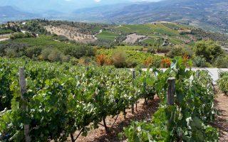 peloponnese-wine-festival-amp-8211-polytropos-polystafylos-peloponnisos0
