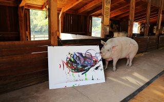 Η Πιγκάσο, η ταλαντούχα γουρουνίτσα, ποζάρει με ένα από τα έργα της, έξω από το Κέιπ Τάουν στη Νότιο Αφρική.