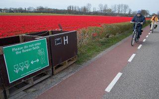 «Παρακαλώ μην εισέρχεστε στις πεδιάδες», αναγράφεται στην ταμπέλα στο Λίσε της Ολλανδίας.  Η έκκληση απευθύνεται στους τουρίστες, οι οποίοι είναι μεν ευπρόσδεκτοι στην περιοχή, συχνά όμως τσαλαπατούν τα λουλούδια που καλλιεργούν οι ντόπιοι αγρότες. Υάκινθοι, ασφόδελοι και τουλίπες αποτελούν αξιοθέατο για τους επισκέπτες στη χώρα, που συρρέουν μαζικά κοντά στην ακτή της Βόρειας Θάλασσας για να απαθανατίσουν το χρωματικό υπερθέαμα και να ποστάρουν τις φωτογραφίες τους στο Instagram.
