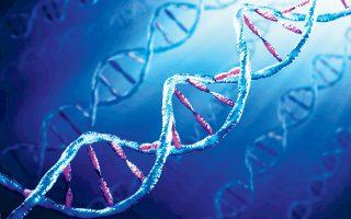 Οπως τονίζει ο κ. Καχριμάνης «η αθλητική απόδοση επηρεάζεται από τη γενετική προδιάθεση (ταλέντο) και την επίδραση των γονιδίων στις προσαρμογές από την προπόνηση». Ετσι, οι επιστήμονες με μια απλή εξέταση βρίσκουν τα γονίδια και συνθέτουν το ιδανικό γενετικό προφίλ (αθλητικό και υγείας) φτιάχνοντας μια βάση δεδομένων για την εξατομίκευση προπονήσεων και διατροφής.